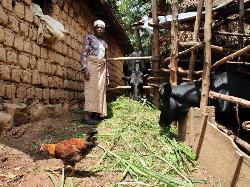 ruanda mit kuh und kredit sos kinderd rfer weltweit. Black Bedroom Furniture Sets. Home Design Ideas
